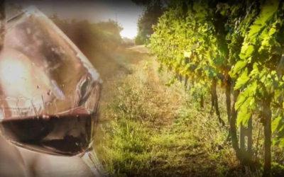 """Corso sul vino italiano """"L'Italia del Vino"""""""