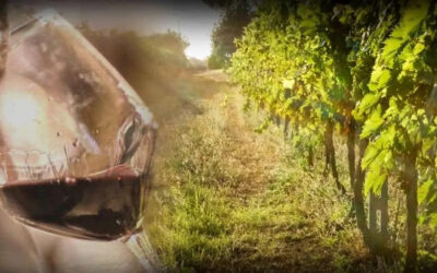 """""""L'Italia del vino"""" – Corso sul vino Italiano, Maggio 2021"""