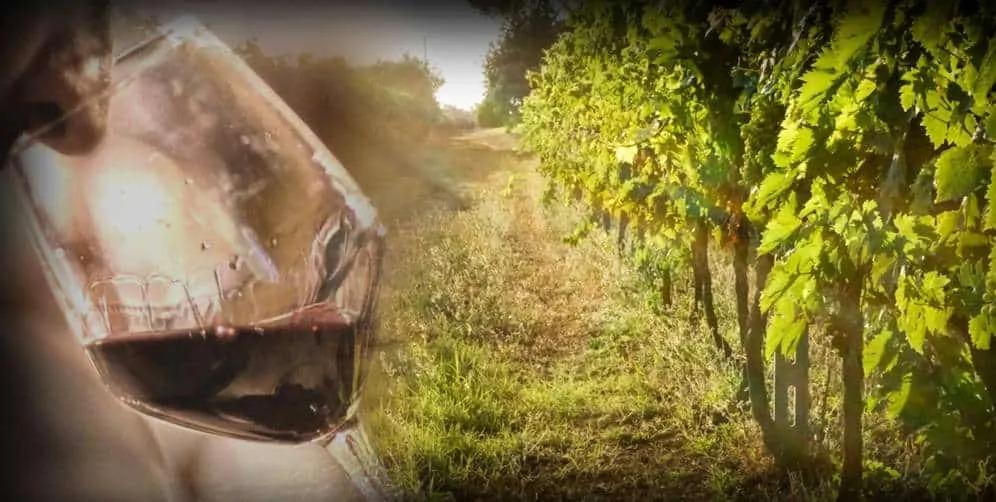 """""""L'Italia del vino"""" – Course on Italian wine, May 2021"""